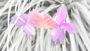 Alles Orchideen?